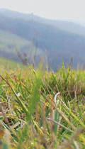 Foto Gras